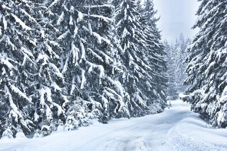 road covered with snow near the forest Stock Photo