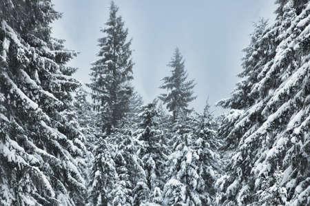 wilde winter scene in the forest in winter season