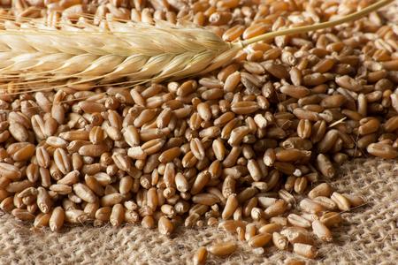 �bergang von Weizen Samen Konzept Lizenzfreie Bilder