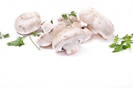 white fresh champignon mushroom on white background