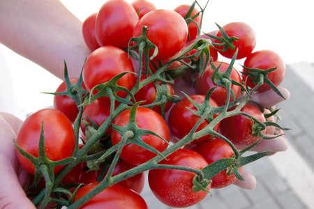 frischen Tomaten Gem�se mit leuchtend roter Farbe Lizenzfreie Bilder