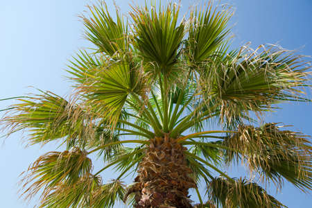 palm tree with blue sky in background