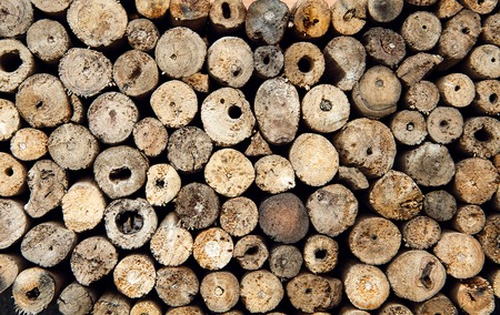 stacked up: Background of dry teak logs stacked up on top of each other in a pile Stock Photo