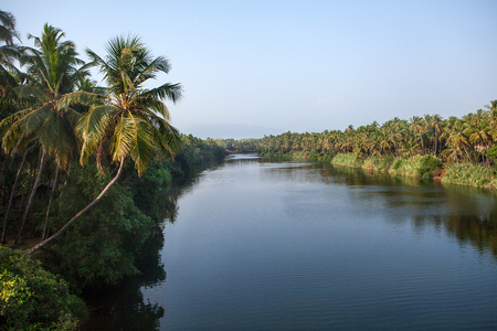 backwaters: Coconut palm trees along the backwaters of Kerala, India