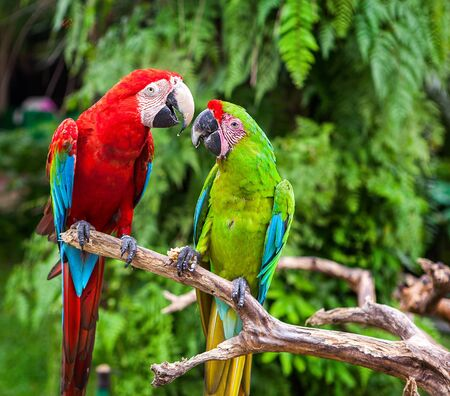secrets: Two green parrots telling secrets