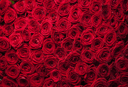 red wallpaper: Natural fresh red roses background, love wallpaper Stock Photo