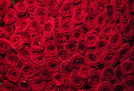 Natuurlijke verse rode rozen achtergrond, liefde wallpaper Stockfoto