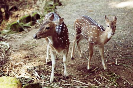 baby deer: two pretty baby deer in natural background