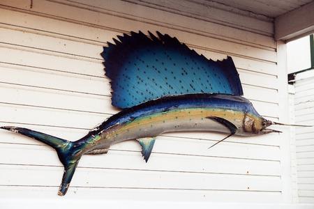 pez vela: nodel pez vela en la pared blanca, la pesca Foto de archivo