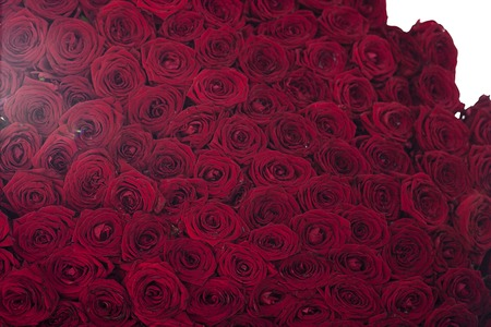 red wallpaper: Natural red roses background, background or wallpaper