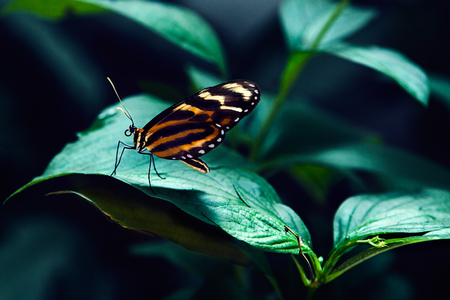 big tropical butterfly sitting on green grass