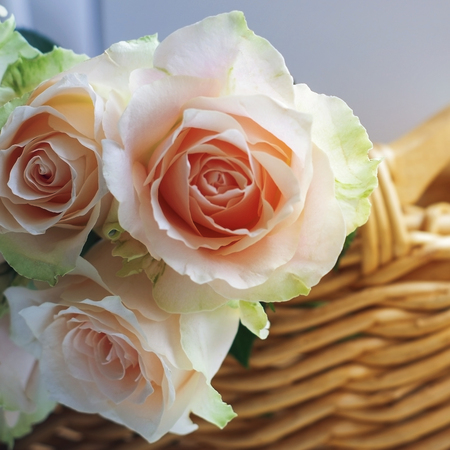 Bouquet of pale pink cream roses in a woven basket on a windowsill. Soft focus. Romance background with copy space.
