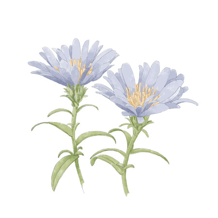 transparently: water paint flower Illustration