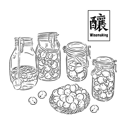 Plum wine, food illustration, Chinese text means brewing, vector illustration Ilustracja