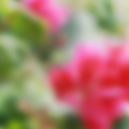 bush mesh: vector blurred background of pink tropical flowers