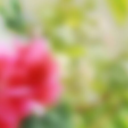 bush mesh: vector blurred background of pink tropical flower