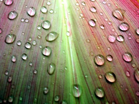 Multi colored pattern details of a leaf with raindrops