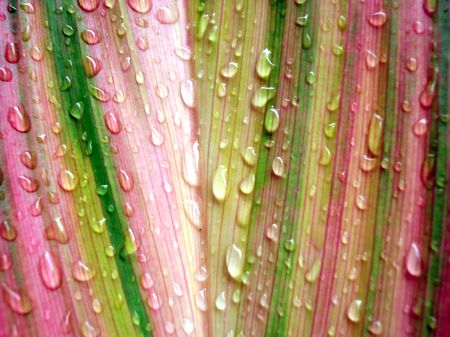raindrops clinging to multi colored  leaf  Stock Photo