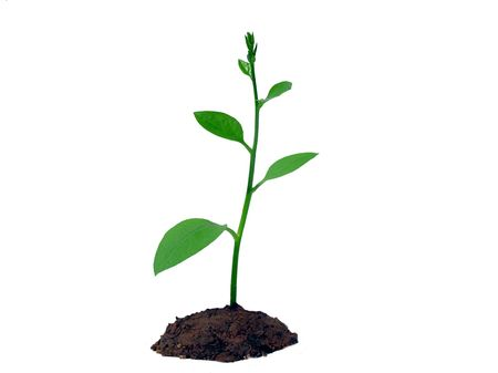 new and young plant on white Stock Photo