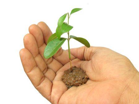 Mano sosteniendo una planta nueva y joven en blanco Foto de archivo - 2419376