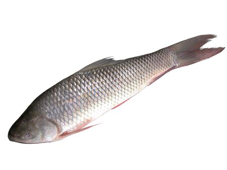 Image of  raw fish on white Stock Photo - 2616255