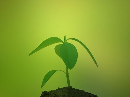 Plant in soil against green background Stock Photo - 3973379