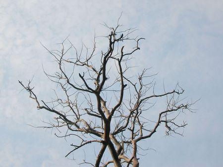 dead tree against cloudy sky Stock Photo