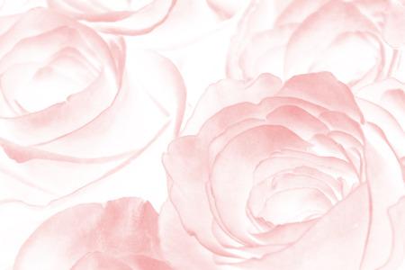 Fond rose Banque d'images - 61257278