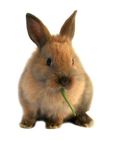 かわいいイースターのウサギが草を食べて 写真素材 - 2673464