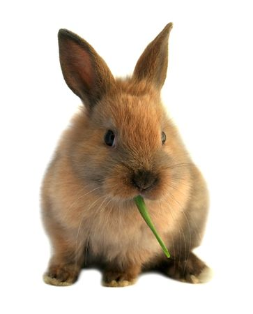 Cute easter rabbit eating grass Stock Photo