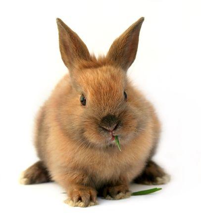 かわいいイースターのウサギ 写真素材 - 4545120