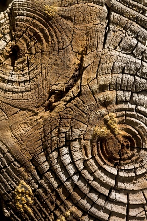 annual: Abstract wood background