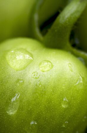 Green tomato with water drops photo