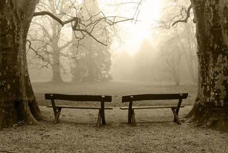 Two benches in a foggy wood photo