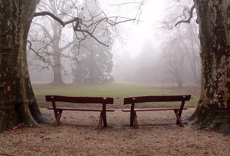 霧の森の中の 2 つのベンチ 写真素材 - 12609113