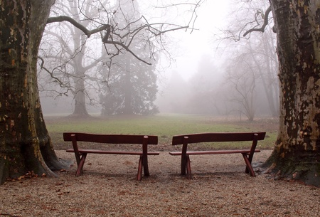 Two benches in the foggy wood
