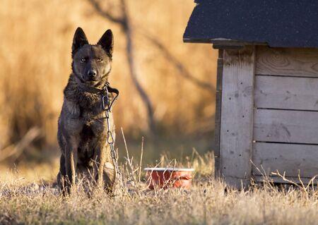 perro asustado: Perro solitario