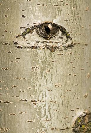 目をデザインと抽象的な木の樹皮 写真素材 - 13873524