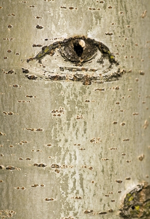 aspen: Abstract tree bark with eye design