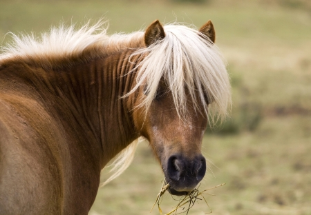 pretty pony: Beautiful yellow horse looking at the camera Stock Photo