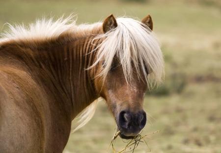 Mooie gele paard kijken naar de camera