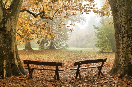 autumn in the park: Two benches in a colorful Autumn wood Stock Photo