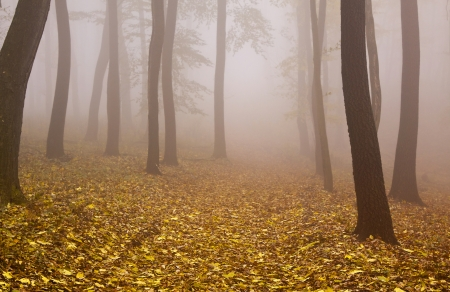 Foggy mysterious Autumn wood photo