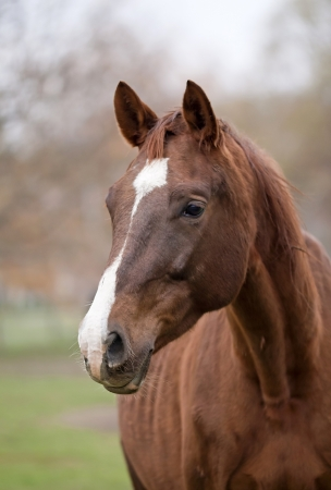 Beautiful brown horse portrait
