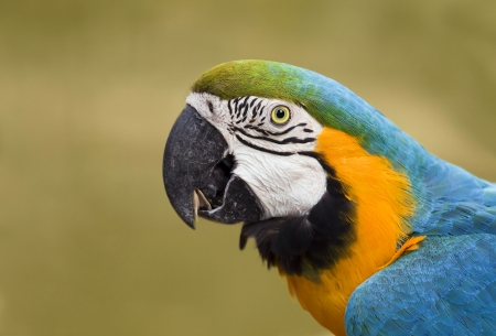 Portrait of a beautiful macaw parrot  photo