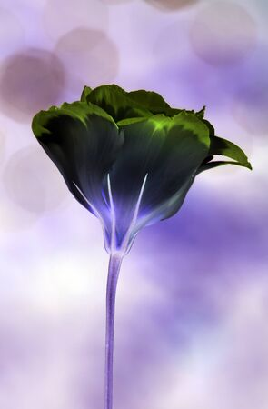 Abstract flower - creative idea for a greetings card