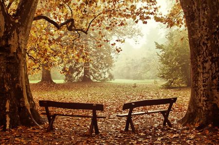 Twee banken in een kleurrijke houten Herfst