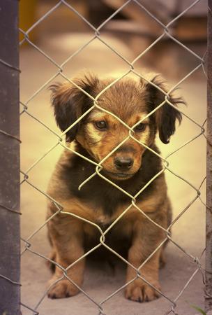 frightened dog: Dachshund cachorro sentado detr�s de la cerca de malla de alambre en el filtro retro vendimia