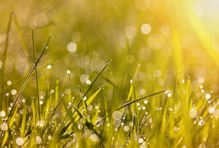 Beautiful dew grass with drops in the morning light Stock Photo
