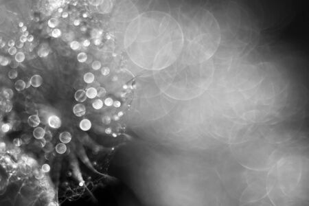 dewdrop: Shiny abstract holiday background